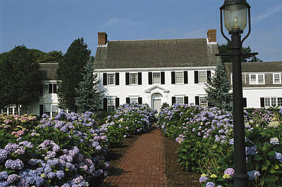 Cape Estate Photograph - Blooming Hydrangeas Line A Homes Front by Darlyne A. Murawski