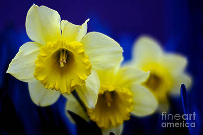 Photograph - Blooming In Blue by Jane Brack