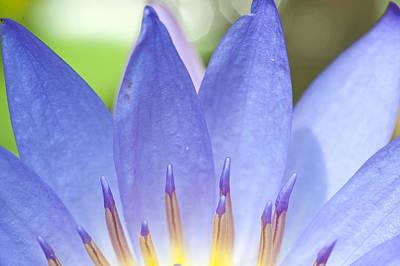 Blooming Lotus Art Print by Maratsavalai Lertsirivilai