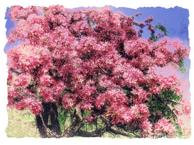 Photograph - Blooming Pink Cherry Tree by Renata Ratajczyk