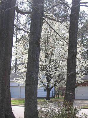 Blooming Tree Art Print by Marlene Robbins