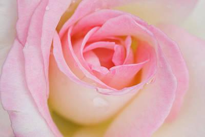 Blossom Original by Atiketta Sangasaeng