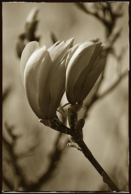 Photograph - Blossoming by Terence Davis