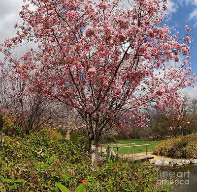 Pastoral Landscape Digital Art - Blossoms In A Park by Nicholas Burningham