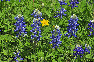 Photograph - Blue And Yellow by Helen Haw