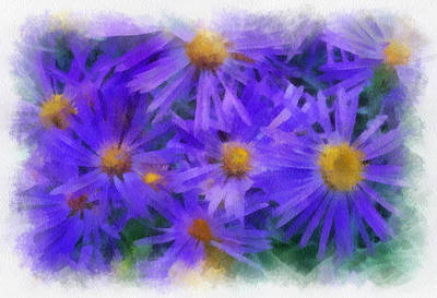 Digital Art - Blue Asters - Watercolor by Charles Muhle