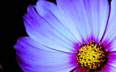 Australian Flowers Photograph - Blue Awakening by Tam Graff