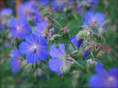 Art Print featuring the photograph Blue Beauties by Robin Regan