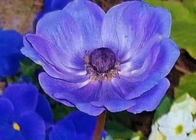 Flower Photograph - Blue Beauty by Michelle Cassella