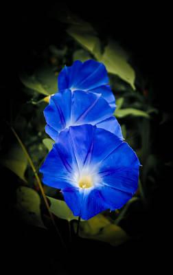 Blue Beauty Art Print by Swift Family