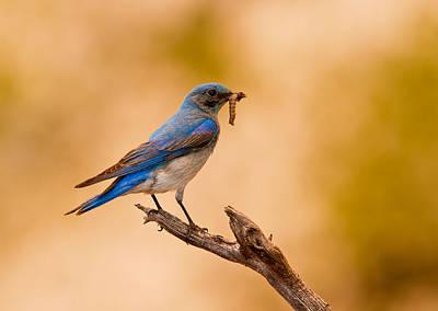 Blue Bird Meal Original by Donna Caplinger