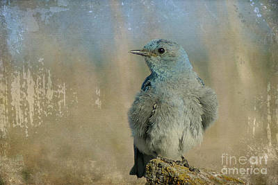 Bluebird Photograph - Blue Bird by Teresa Zieba
