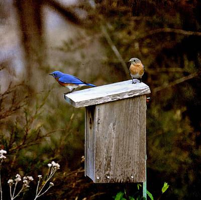 Blue Birds Art Print by Todd Hostetter