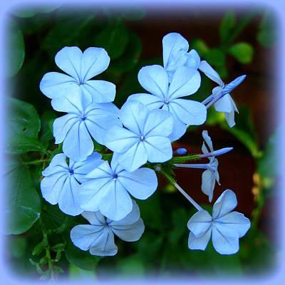 Blue Blossoms Art Print by Carla Parris