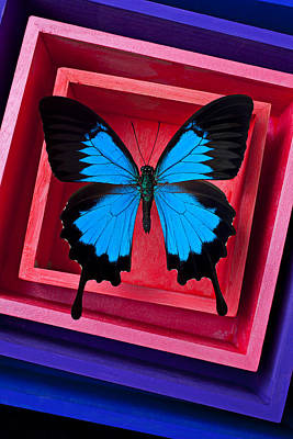 Blue Butterfly In Pink Box Art Print by Garry Gay