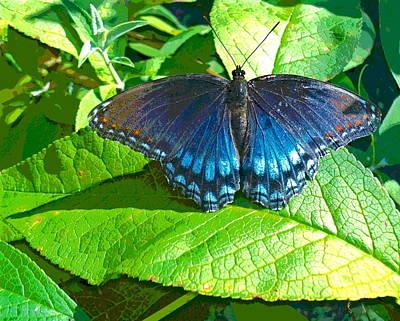 Blue Butterfly On Foliage Art Print by Padre Art