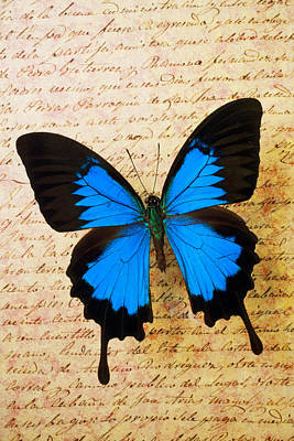Blue Butterfly On Old Letter Art Print
