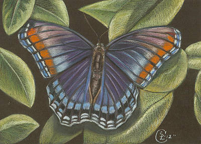 Blue Butterfly  Art Print by Stephanie L Carr