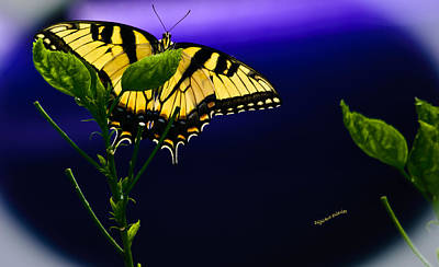 Blue Swallowtail Photograph - Blue By You by DigiArt Diaries by Vicky B Fuller