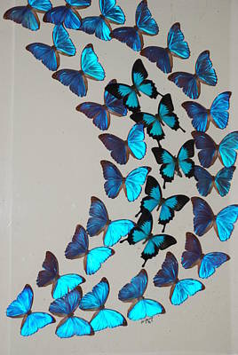 Photograph - Blue Curved Butterflies by Rob Hans