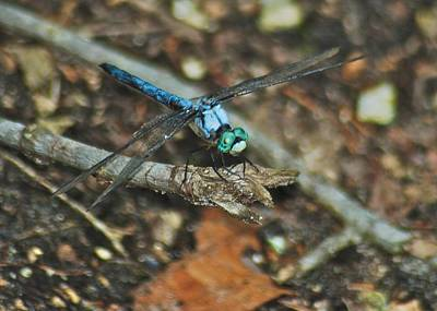 Dragonfly Eyes Photograph - Blue Dasher 8658 3287 by Michael Peychich