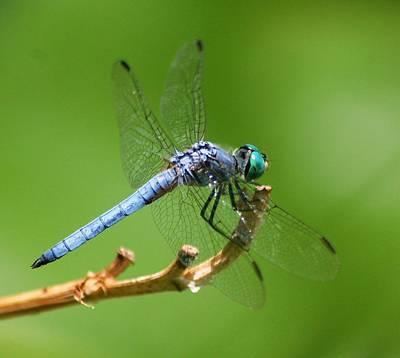 Blue Dragonfly Start Up Art Print by Meeli Sonn