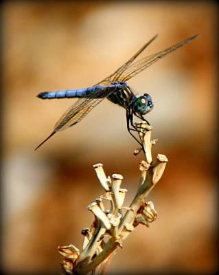 Blue Dragonfly Art Print by Tam Graff
