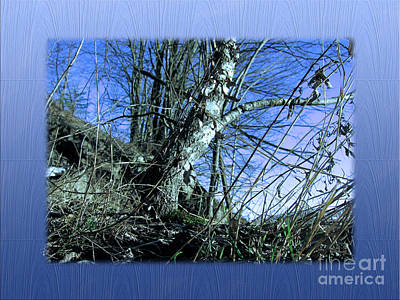 Photograph - Blue Early Spring by Michelle Bergersen