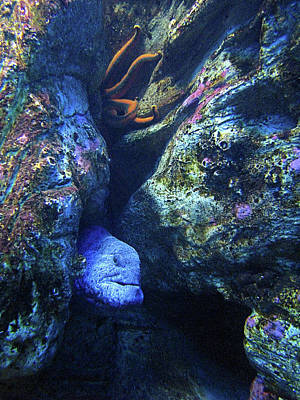 Photograph - Blue Eel And Shy Friend by Lora Fisher