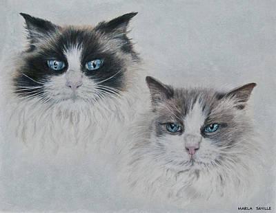 Blue Eyed Cats Art Print by Marla Saville