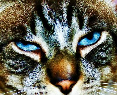 Animal Lover Digital Art - Blue Eyes by Alma Yamazaki