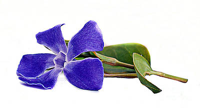Colourfull Photograph - Blue Flower 2 by David  Hollingworth