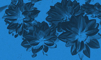 Blue Flower Art Art Print by Aimee L Maher Photography and Art Visit ALMGallerydotcom