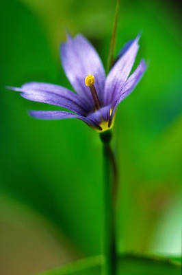 1 Object Photograph - Blue Flower by Robert Postma