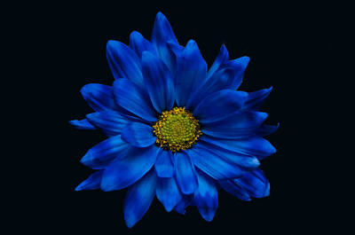 Blue Flower Art Print by Ron Smith