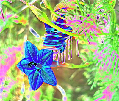 Impressionist Style Photograph - Blue Flowers 2 by Padre Art