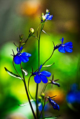 Photograph - Blue Flowers-anime by Onyonet  Photo Studios