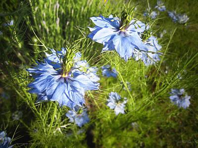 Photograph - Blue Flowers by John Neville Cohen