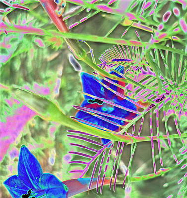 Impressionist Style Photograph - Blue Flowers by Padre Art