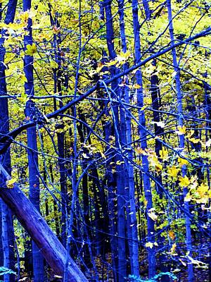 Photograph - Blue Forest by Todd Sherlock