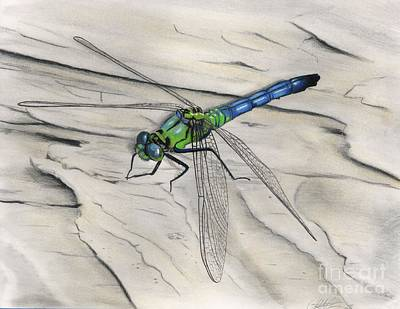 Drawing - Blue-green Dragonfly by Christian Conner