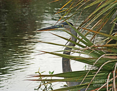 Photograph - Blue Heron - Blending In by Terri Mills