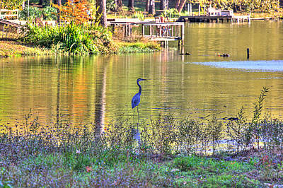 Blue Herron Photograph - Blue Heron-2 by Barry Jones