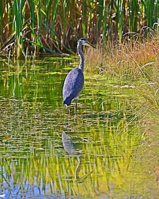 Photograph - Blue Heron by Edward Kovalsky