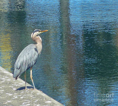 Photograph - Blue Heron by Harry Strharsky