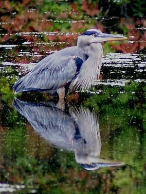 Photograph - Blue Heron In Autumn by Joe Faherty