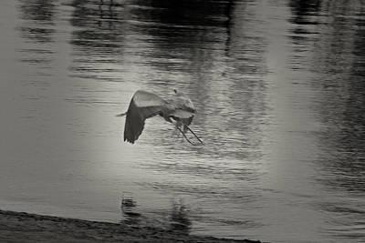 Platinum Photograph - Blue Heron In Platinum by Douglas Barnard