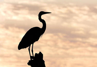 Photograph - Blue Heron Silhouette by Rudy Umans