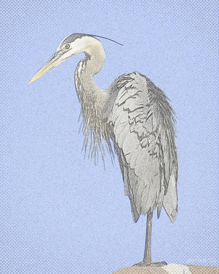 Photograph - Blue Heron  by T Guy Spencer