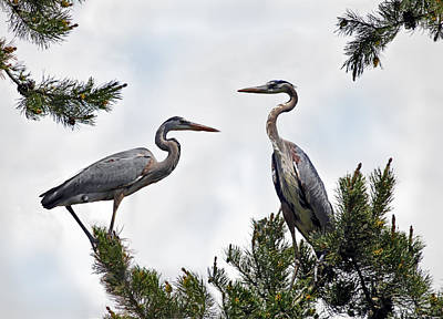 Great Blue Heron Photograph - Blue Herons by Leland D Howard